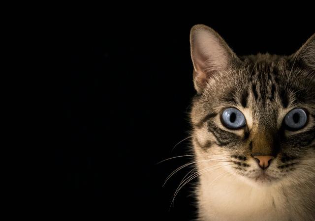 Jak oduczyć kota drapania mebli