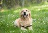Jak pozbyć się sierści psa w domu