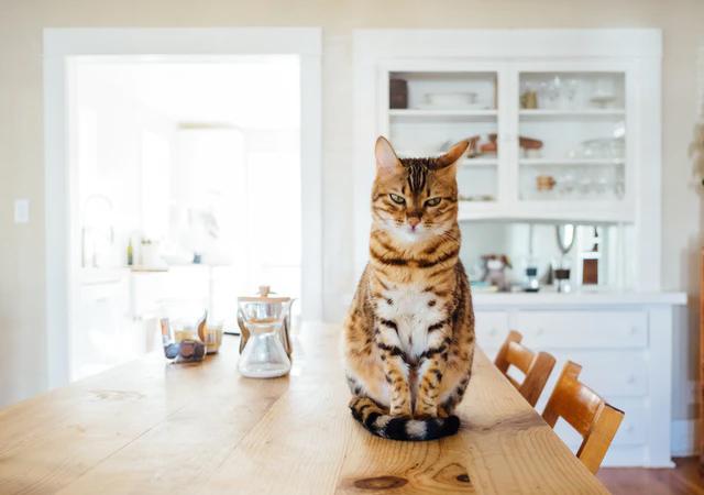 Jak przygotować mieszkanie dla kota