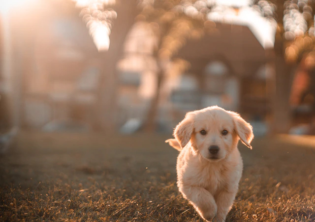 Jak przygotować dom na pojawienie się psa
