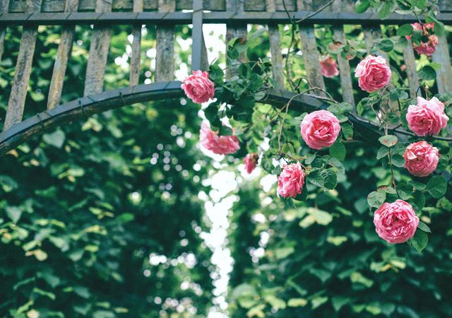 Co zrobić z kwiatami po walentynkach